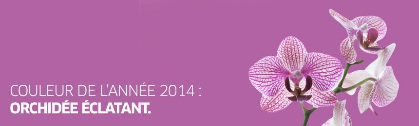 La couleur de l 39 ann e 2014 orchid e clatant monde des pierres - Symbole de l orchidee ...
